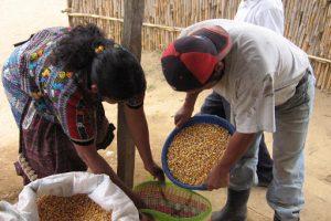Alimentación, Guatemala