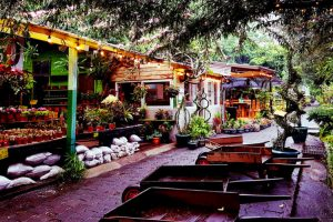 Conoce los viveros en la Ciudad de Guatemala