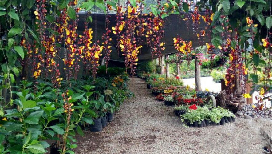 Vivero Botanik