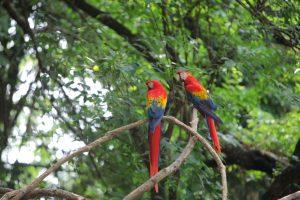 la biodiversidad en guatemala