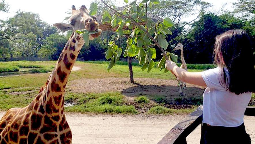 Zoológico peatonal