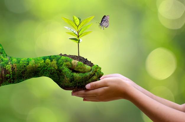 manos representando la sostenibilidad ambiental