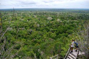 bosque en guatemala